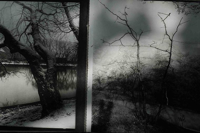 Sudek's Trees IV
